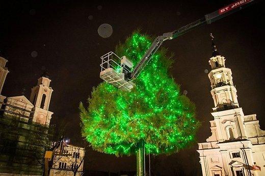 Каунас и в этом году удивит необычной елью